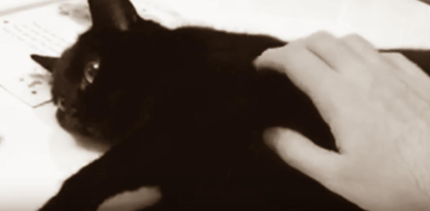 kerang dan kucing